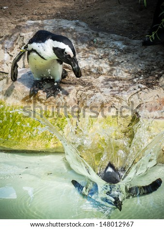 penguins jumped in to the water