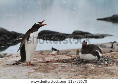 Penguins nest - stock photo