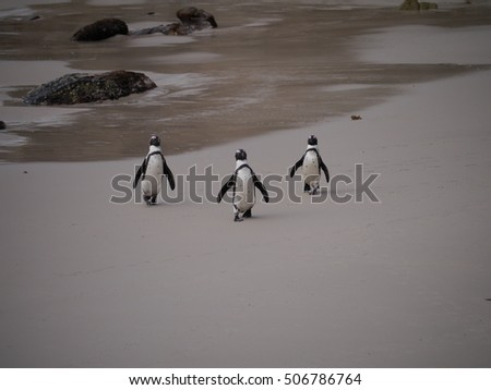 Penguins on a beach in Cape Town