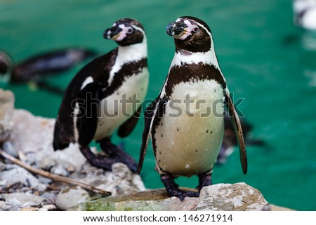 Penguins on a rock - stock photo
