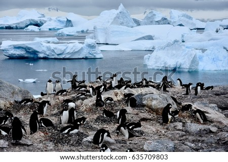 Penguins playing near Cuverville Island, Antarctica