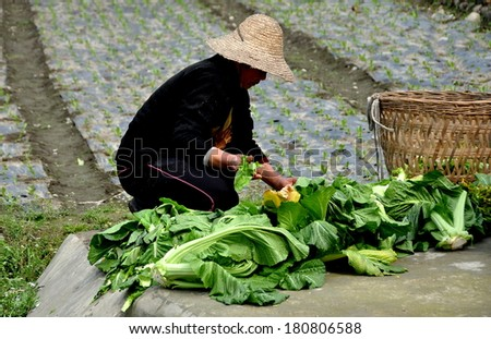 Pengzhou, China - March 8, 2014:  Woman wearing straw hat culling yellow leaves from freshly harvested Chinese lettuce on her Sichuan province farm