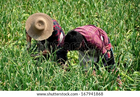 Pengzhou, Sichuan, China March 8, 2013:  Two Chinese women at work in a field of green onions on a Sichuan province farm in Pengzhou, China. - stock photo