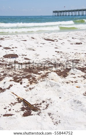 PENSACOLA BEACH - JUNE 23: An oil-stained bird feather lies near large patches of oil on June 23, 2010 in Pensacola Beach, FL - stock photo