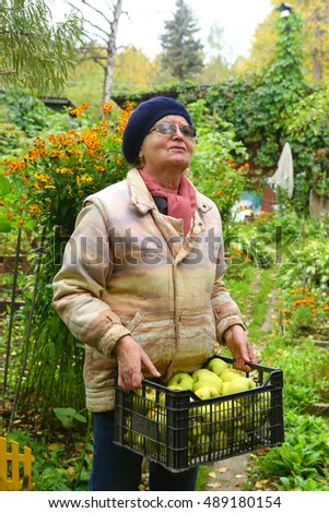 pensioner farmer woman collect apples from apple tree close up photo