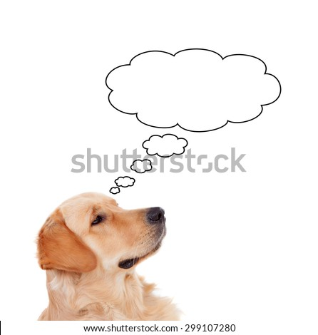 Pensive Golden Retriever dog breed thinking something isolated on a white background - stock photo
