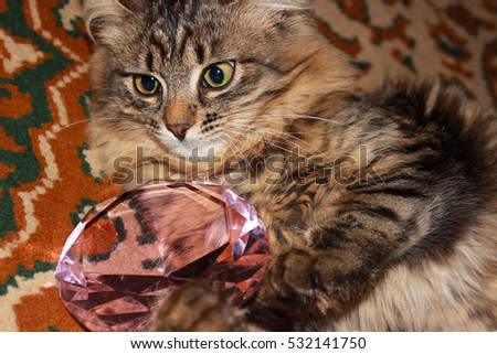 pensive tabby cat playing with pink crystal on the carpet with ornaments