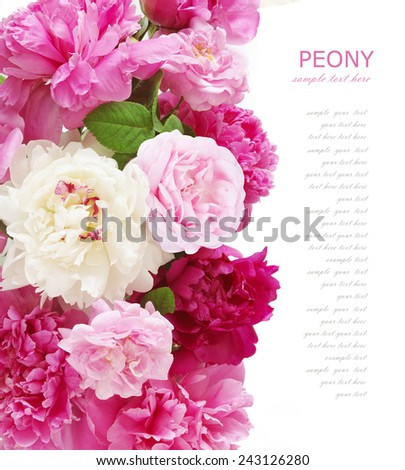 Peony and roses background isolated on white with sample text - stock photo