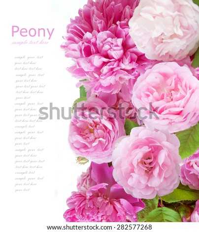 Peony and roses flower background isolated on white with sample text