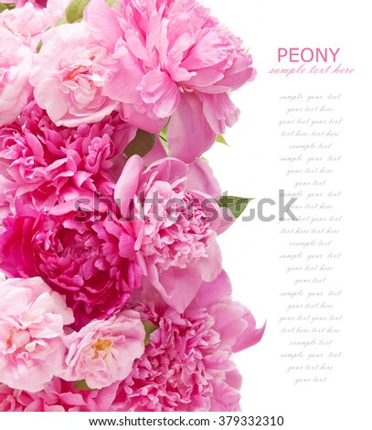 Peony and roses flowers background isolated on white with sample text