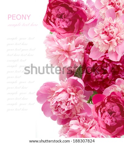 Peony background isolated on white with sample text