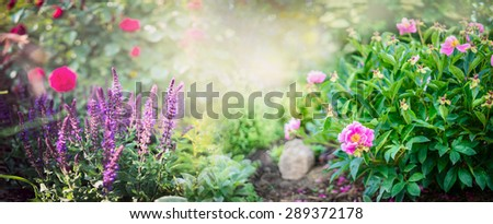 Peony bush with garden sage and red rose flowers on sunny park background, banner for website - stock photo