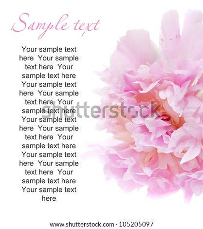 peony flower isolated on white with sample text