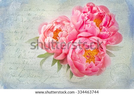 Peony flowers in a white vase - stock photo