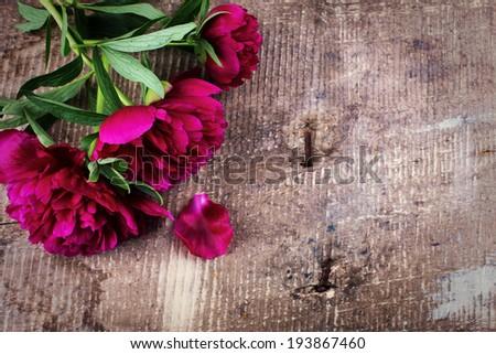 Peony flowers on vintage wooden background. Selective focus, horizontal. - stock photo