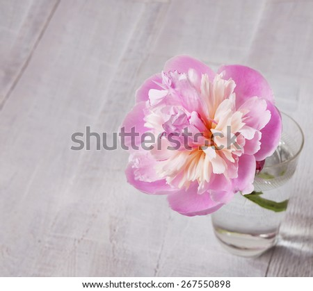 Peony in a glass  on old wooden plank. - stock photo