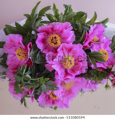 peony, peonies, pink, flower, background, closeup, isolated, nature, summer, beautiful, plant, spring, blossom, white, flowers, beauty, color, soft, fresh, vintage, floral, bud, bunch, bloom, petal