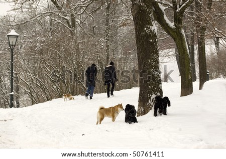 People and dogs walk in the winter on the hill. - stock photo