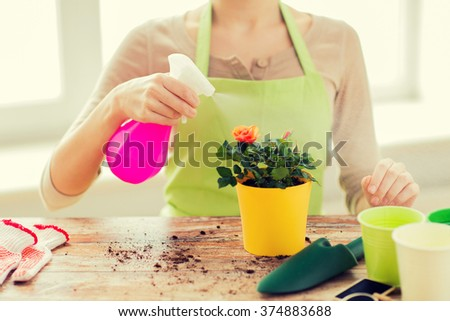 people, gardening, flower planting and profession concept - close up of woman or gardener hands spraying roses with sprayer in pot at home - stock photo