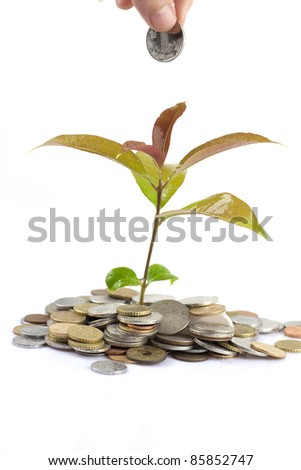 people hand and green tree growing from coins