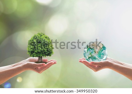 People hands holding perfect big tree on soil World on blur natural background: Reforestation sustainable eco bio forest saving environment  biodiversity life ecosystem conservation CSR WWD campaign  - stock photo