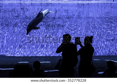 People looking a dolphin diving into the Genova Aquarium - stock photo