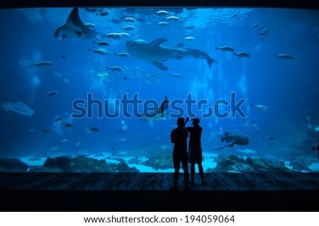 People observing fish at the aquarium - stock photo