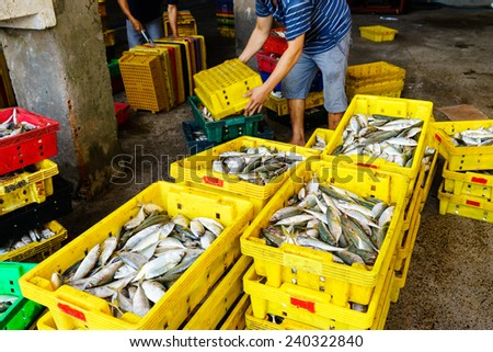 People's Daily life, fishing village with a lot of fish in fishing basket at traditional fish market on the Long Hai beach. This market only happens in early morning. - stock photo