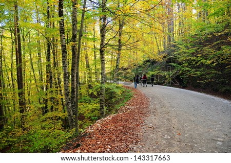 people walking on path in autumn