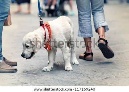 People walking on the street with dog on leash - stock photo