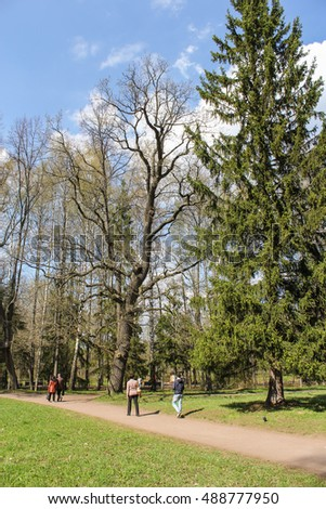 People walking under tall trees. St. Petersburg, Russia - 3 May, 2016. People and spring landscape in Pavlovsk park.