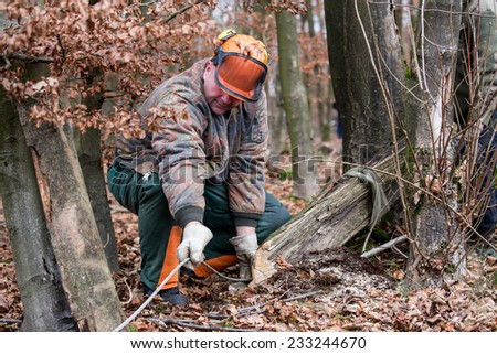 people working in the forest