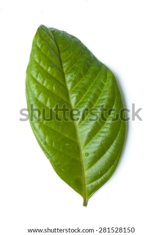 pepper leaves leaves isolated on white