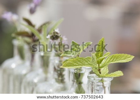 peppermint in a bottle and more herbs out focus