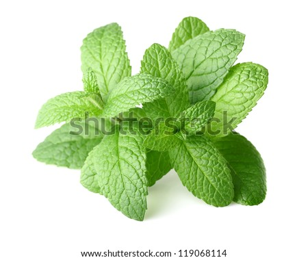 Peppermint in closeup - stock photo