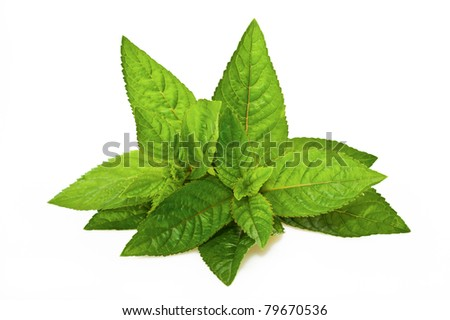 Peppermint leaves isolated on white - stock photo