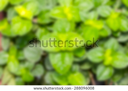 Peppermint pattern blur the background - stock photo