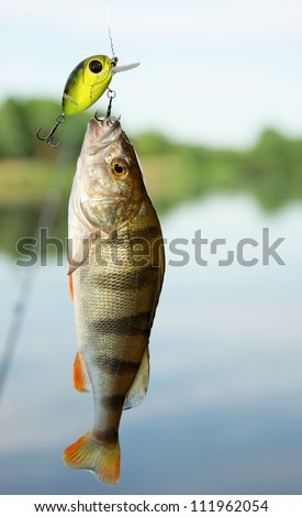 Perch caught on plastic lure against the landscape - stock photo