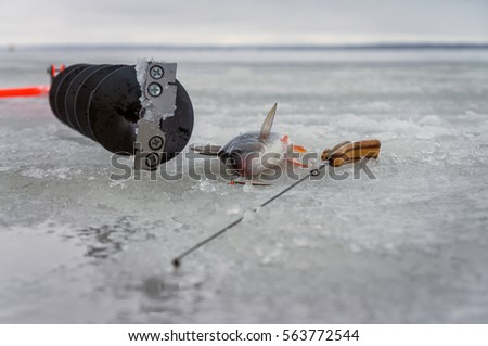 Perch caught on spoon fishing on ice.