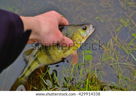 perch in hands