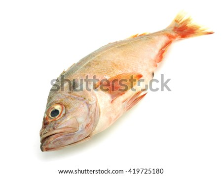 Perch or redfish on a white background - stock photo