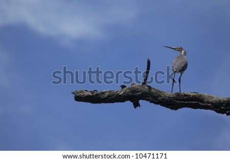 Perched Bird