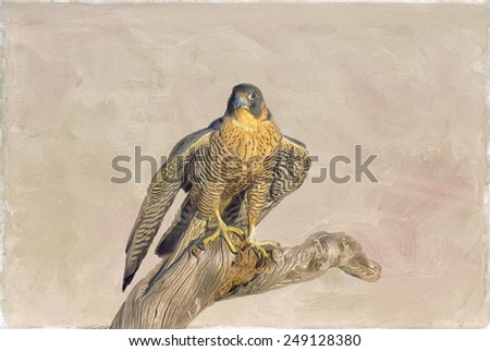 Peregrine falcon against textured background - stock photo