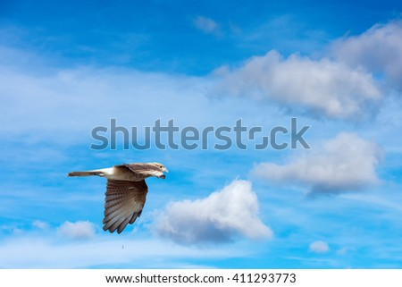 Peregrine Falcon Flying Stock Images, Royalty-Free Images ...