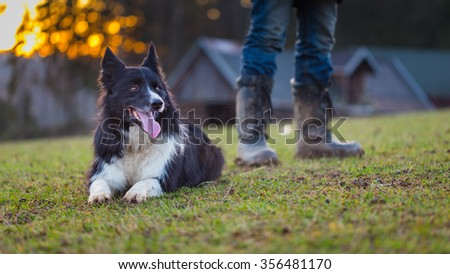 Perfect example of a real partnership - shepherding border collie and his owner behind sheep shed - stock photo