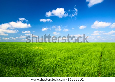 perfect field and blue sky