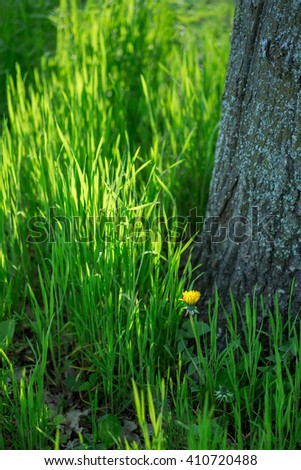 Perfect green grass and tree. Spring backgrounds - stock photo