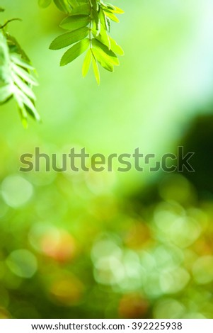 perfect green leaf with natural background
