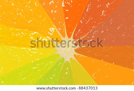 Perfect half of citrus in different colors, background - stock photo