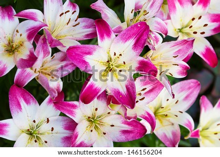 Perfect lily flower background pattern - stock photo